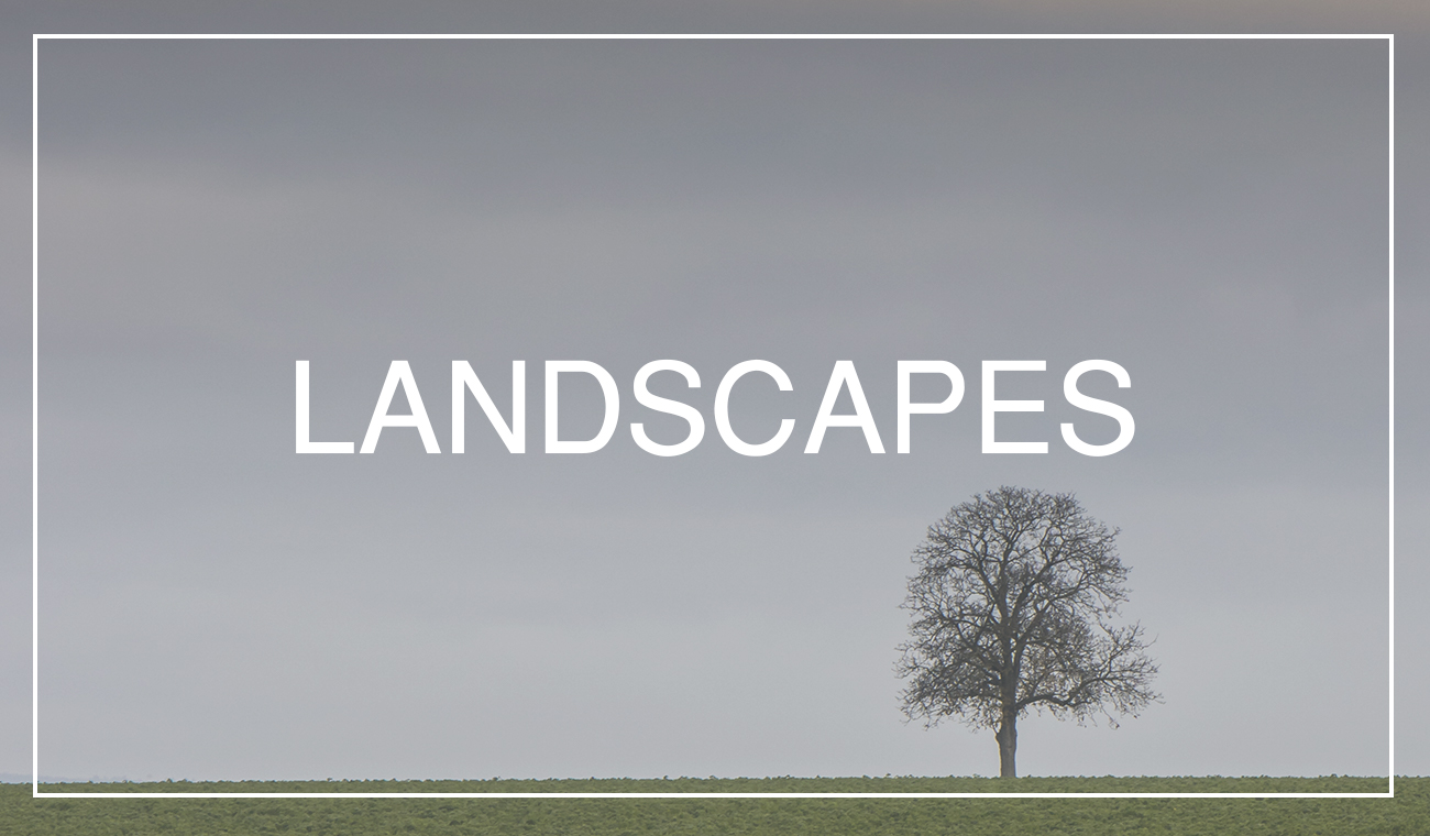Searching Landscapes in your backyards
