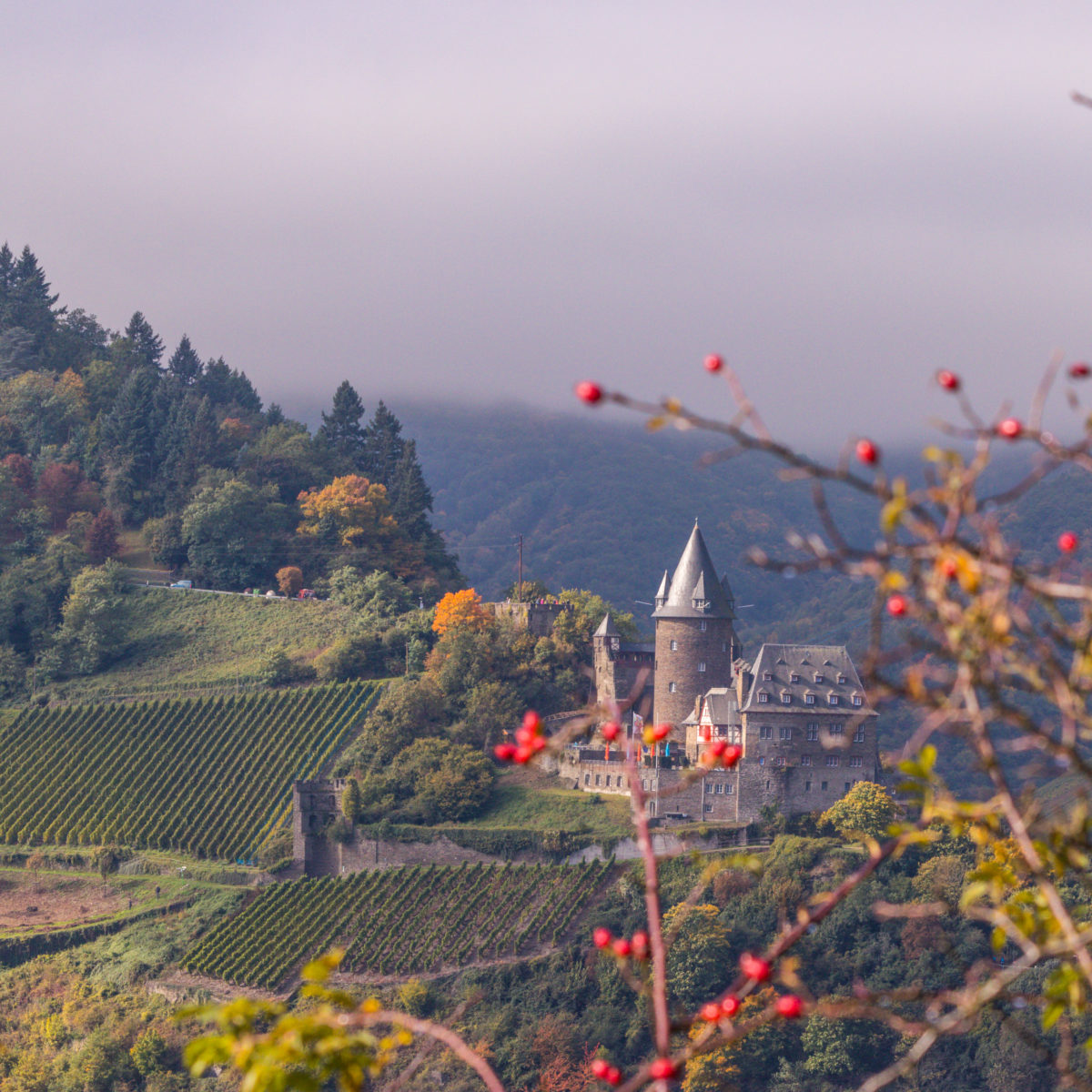 The Stahleck Castle looks like from a fairy tale! Shot from the opposite side of the Rhine Valley (Rheingau)