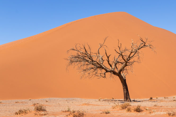 Dune 45, Sossusvlei from below