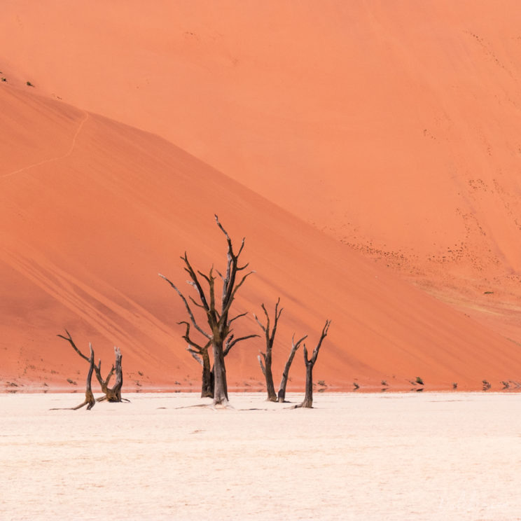 This image of the Deadvlei trees is in fact a crop of a wider shot. Bring a long lens!