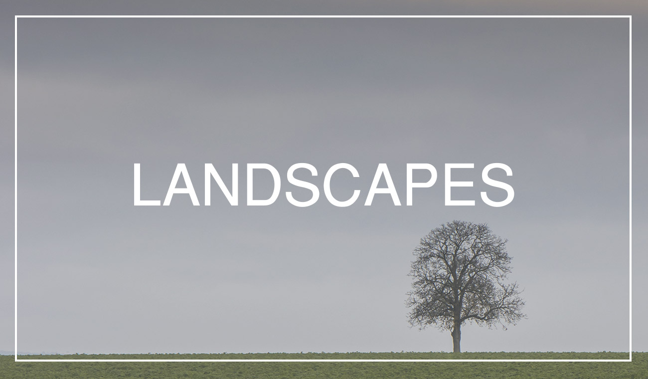 Searching landscape in your backyard