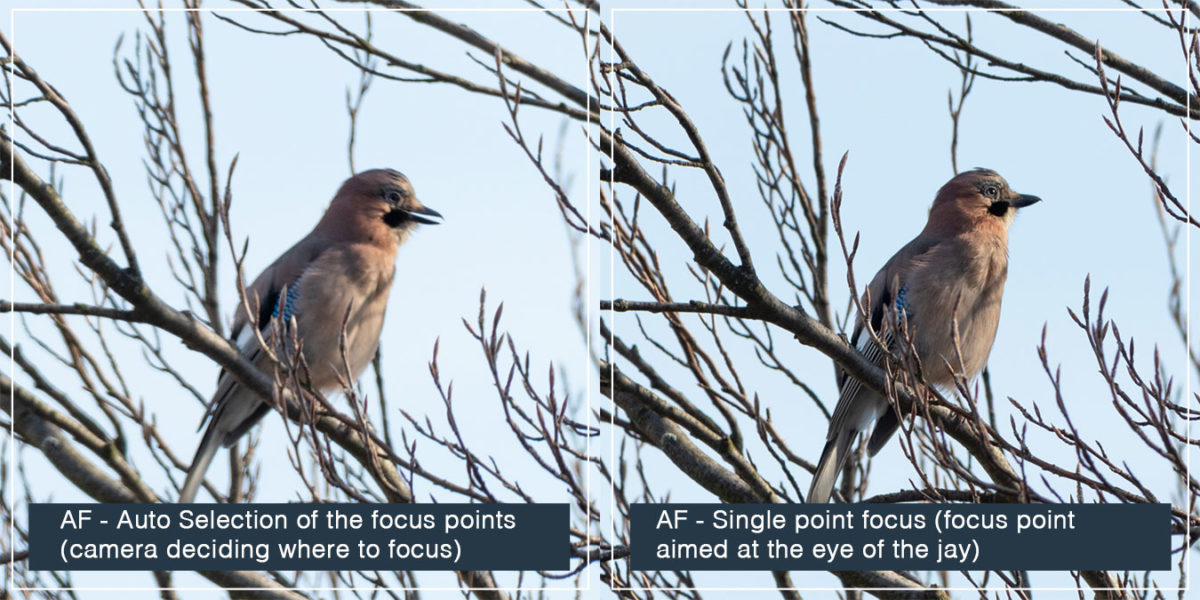 Auto Focus - example of the Auto Selection vs Single point focus. Single point focus can make your images significantly sharper!