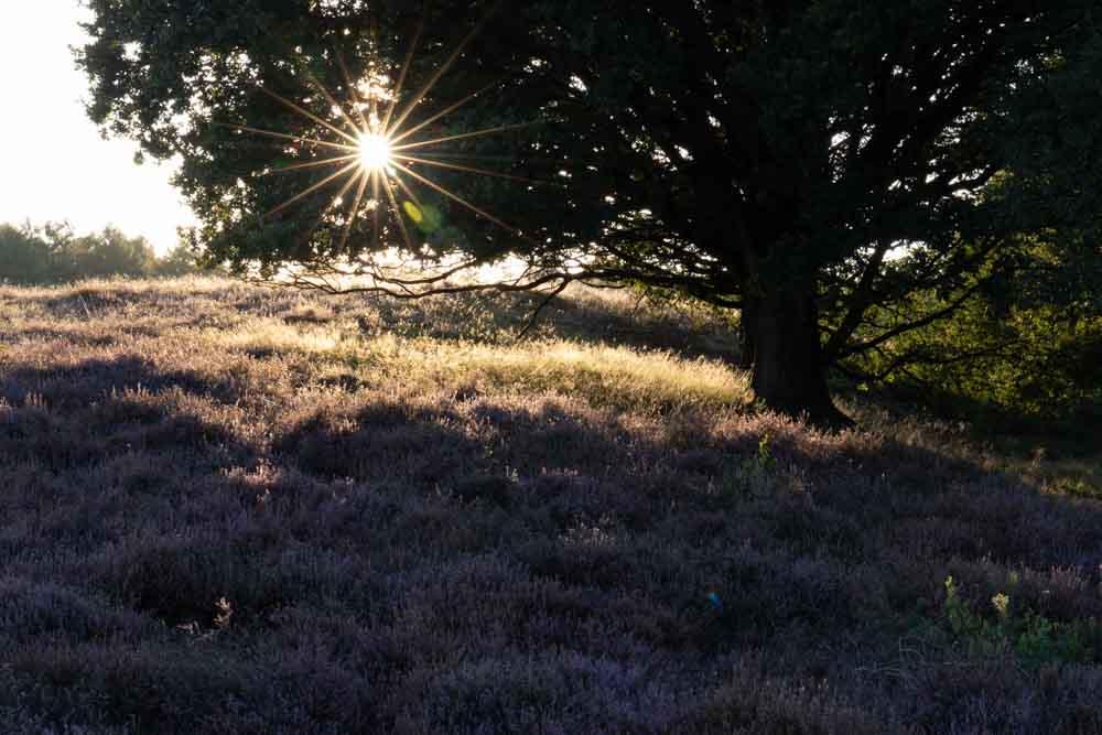 beautifully exposed sunstar