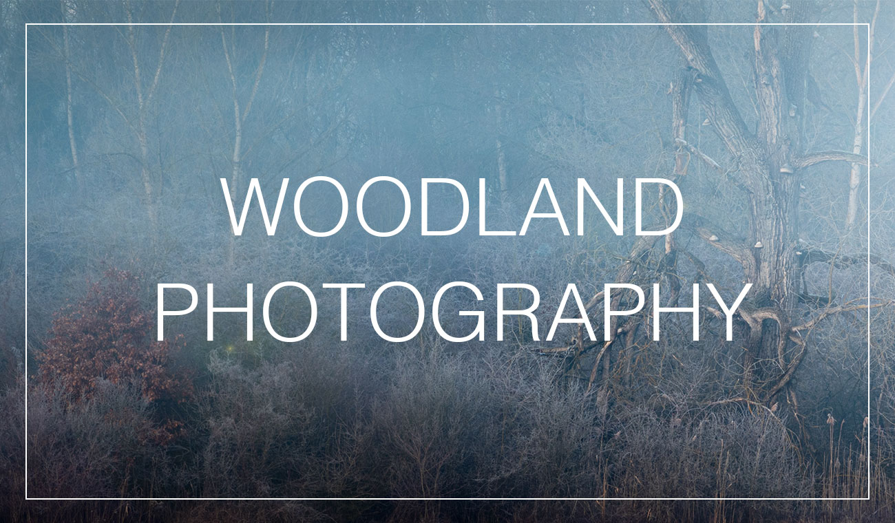 Woodland photography locations and where to find them