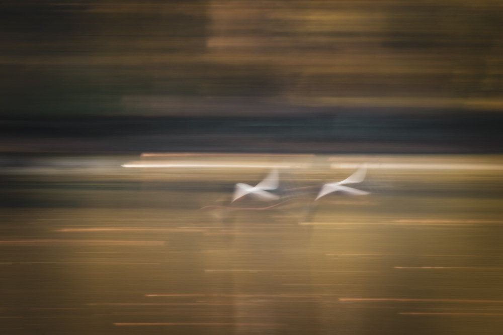 Friends - I captured this pair of flying birds while intentionally using longer shutter speed. My goal was to create an impressionist feeling by letting them move and by following the subject with my camera. This took about 20 attempts!  Canon 80D | 300mm | f22 | 1/2 sec | ISO100