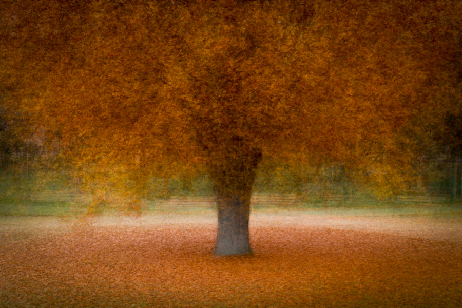 An 'in the round' impressionist image of a tree in a city park.